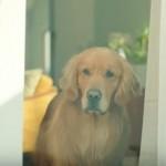 amazon cm 犬 ライオン
