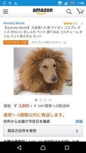 ライオン たてがみ